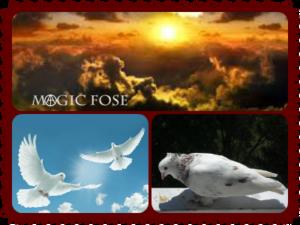 Белые голуби, закат
