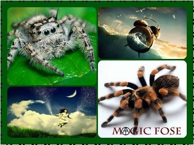 Сонник большой паук к чему снится