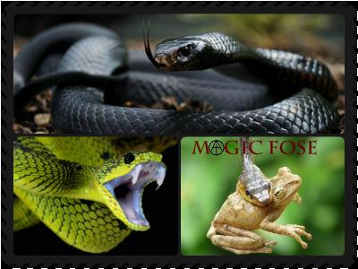 Сонник укусила змея