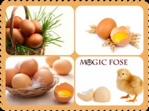 Сонник яйца куриные - значения