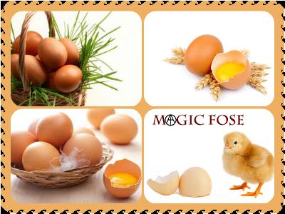Сонник яйца куриные — значения
